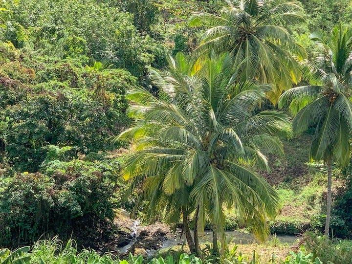 Louer Bungalow Martinique La Sucrerie (6)